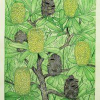 Joseph Austin - Old Man Banksia - Banksia Serrate