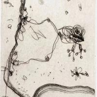 Frog Pond 2017