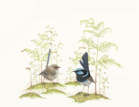 Wrens and Sundews